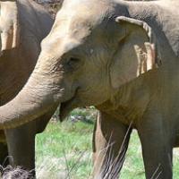 Animal Sanctuaries – Ruth Symes