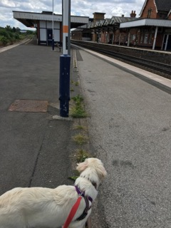 Freya at the station